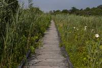 Wetlands Boardwalk 1P