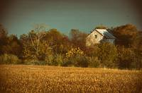 Abandoned Barn In The Trees -Aged Colorized