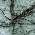 """""""Vine Corner"""" by minordetails"""