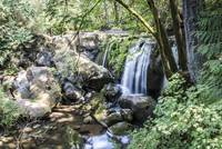 Whatcom Falls, Bellingham, Washington
