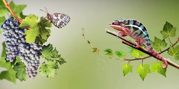 Butterfly and chameleon. 2