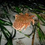 """Seastar on the move 2"" by BellaDomainDesign"