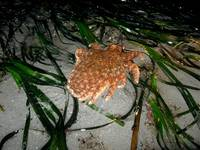 Seastar on the move 2