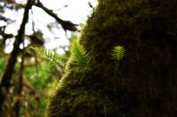 Little Ferns