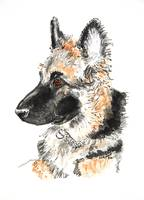 German shepherd dog watercolor