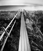 Path to the Sea (Black & White)