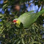 """Amazing Amazon"" by parrots"