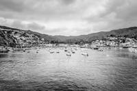 Catalina Island Bay in Black and White