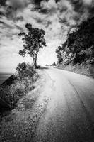 Catalina Island Wrigley Road in Black and White