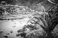 Catalina Island Avalon Bay in Black and White