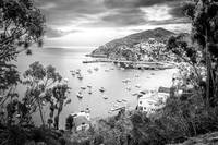 Catalina Island California in Black and White