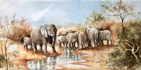 Gathering At The Waterhole, Kapama Reserve