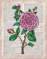 Camellia On Dictionary Page Watercolor Art