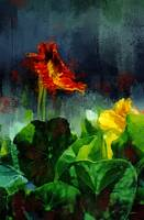 Romeo and Juliet Nasturtiums