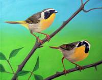 Common Yellow Throats