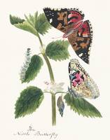 Watercolor Illustration of Nettle Butterfly