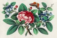 Chinese Floral Painting