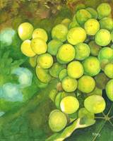 Original gouache painting green grapes
