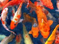 School of Koi II