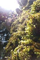 Close up mossy tree