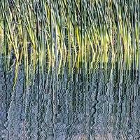 Reeds and Reflections, Lake Padden