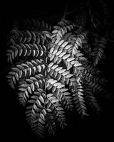 Monochrome Fern