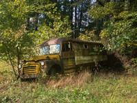 Abandoned Vintage School Bus in the Trees