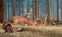 Whitetail Deer - The Gathering