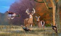 Whitetail Deer - American Heartthrob