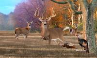 Whitetail Deer - King of Bucks