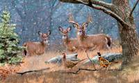 Whitetail Deer - First Snow