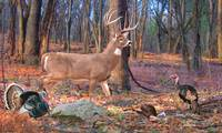 Whitetail Deer - Perfect Ten