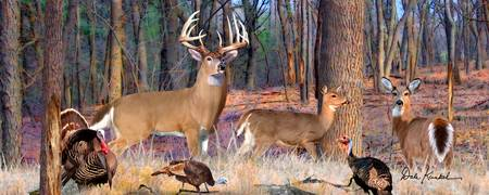 Whitetail Deer Panoramic Wall Art - Heartthrob