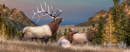 Rocky Mountain Elk Panoramic Wall Art - The Mighty