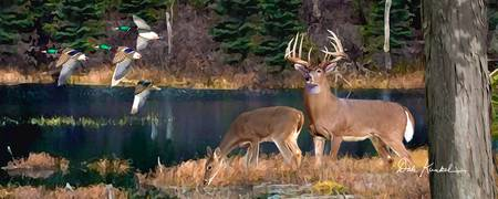Whitetail Deer Panoramic Wall Art - Deer Lake