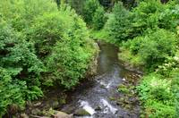 The view of the forest and stream