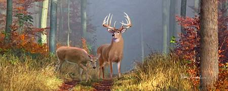 Whitetail Deer Panoramic Wall Art - Time of Endeer