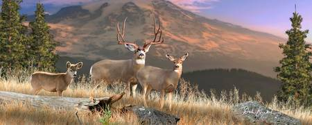 Mule Deer Panoramic Wall Art - Wilderness Family