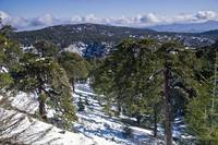 Snowy Troodos mountains Cyprus