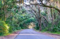 Spanish Moss Tree Tunnel