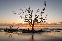 Driftwood Tree Sunrise