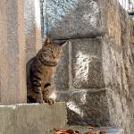 """Temple Cat"" by kevin_haroun"