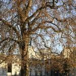 """London old tree"" by BobM"
