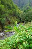 Iao Valley State Monument Study 10