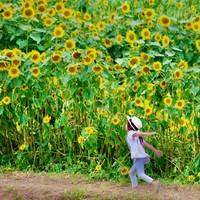 Girl Among Sunflowers