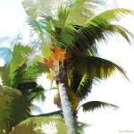 """Palms at Hillsboro Inlet Park"" by Norm"