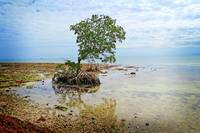 Surroundings - Florida Keys I