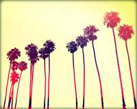 California Palms IIII