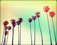 California Palms III