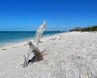 Surroundings - Cayo Costa Driftwood